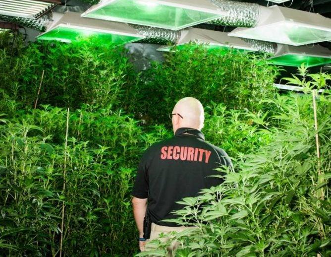 Marijuana Farm Security